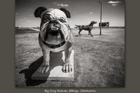 Big Dog Statues, Billings, Oklahoma